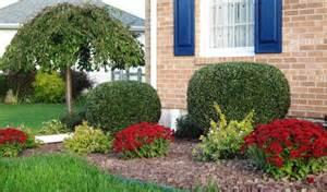 new shrubs abelia kaleidoscope