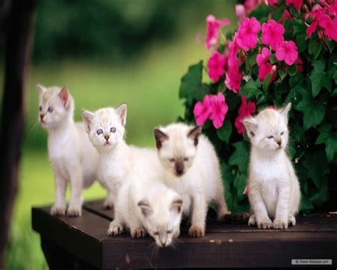 cat kittens wallpaper  love  quotes