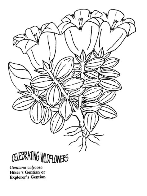 free coloring pages of rainforest plant