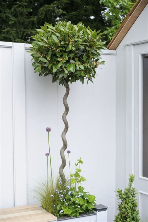plants for small pots best 20 potted trees ideas on pinterest potted plants