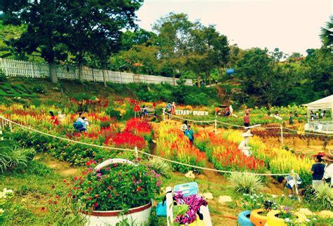 Garden Info Sirao Garden Busay Cebu