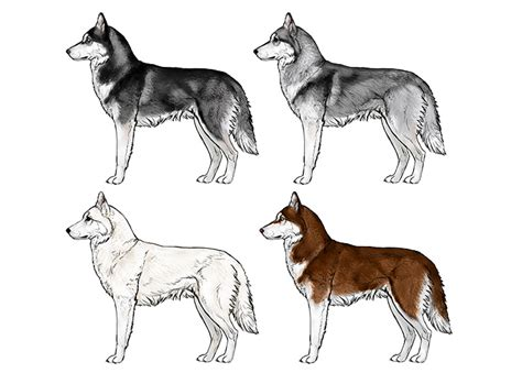 how to a husky puppy how to draw a details make the difference