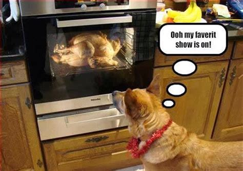 After Thanksgiving Meme - 35 top funny thanksgiving memes