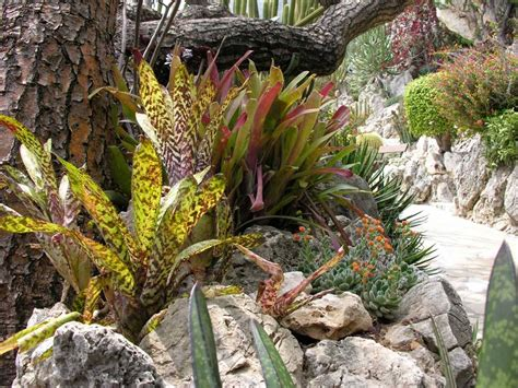 giardino esotico giardino esotico di monaco photo 8