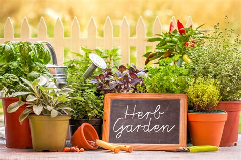 Advantages Of Kitchen Garden by Benefits Of Kitchen Garden Importance Of Kitchen Garden
