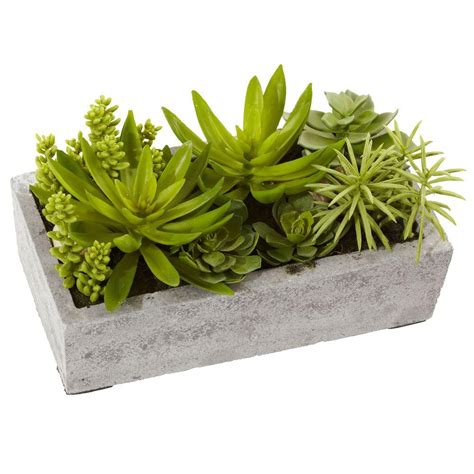 concrete succulent planter nearly succulent garden with concrete planter 4841 the home depot