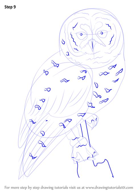 spotted owl coloring page step by step how to draw a spotted owl