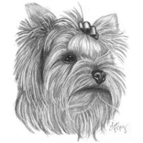 ohio yorkies 230 best images about dessin yorkie on
