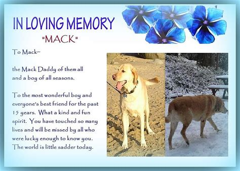 Animal Rescue Tribute by A Tribute To Mack Saving Pets One At A Time Animal