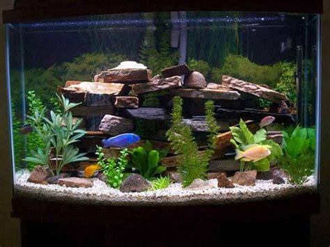 Decorating Ideas For Fish Tank Home Accessories Fish Tank Decor Ideas With Black