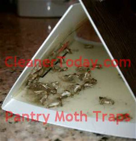 Pantry Moths Extermination finally i am in of the pantry moths