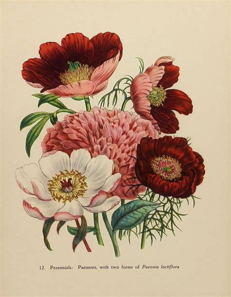 tattoo flower print 25 best ideas about vintage flower prints on pinterest