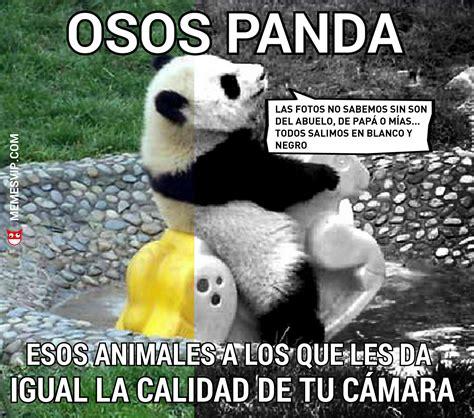 meme oso panda foto blanco y negro memesvip com