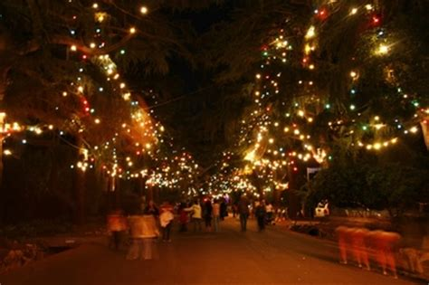 christmas tree lane route in altadena ca 91001 citysearch