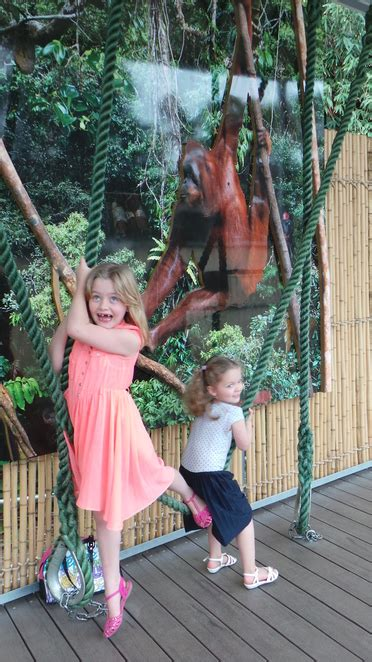 swing like a monkey a visitor s guide to jungle school at perth zoo perth