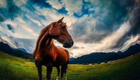 Imagenes De Paisajes Y Caballos | te gustaran estas bonitas imagenes de paisajes con