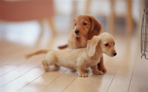 1000  images about Cute puppies on Pinterest   Cute