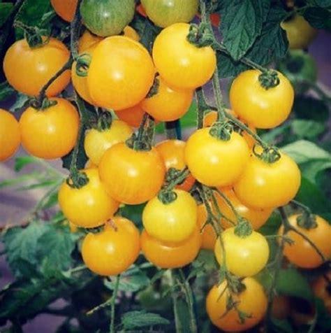Tanaman Hias Cantik pengertian tanaman hias yang perlu diketahui bibitbunga