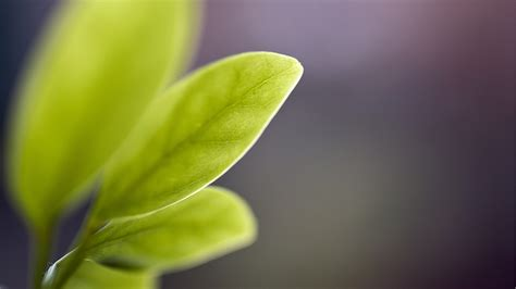 green leaves blur wallpapers hd wallpapers id