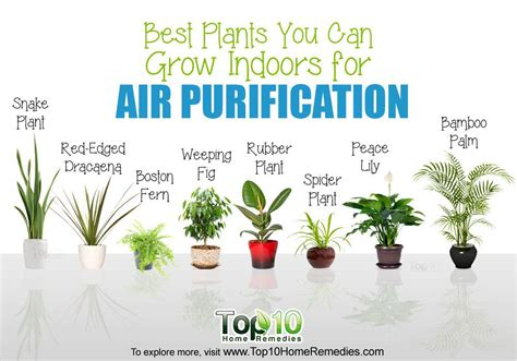 best plants 10 best plants you can grow indoors for air purification