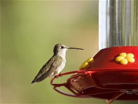 hummingbird food bigoven