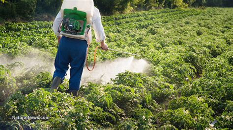 Garden Pesticides by Toxic Herbicide Triggers Leaky Gut And Brain Damage