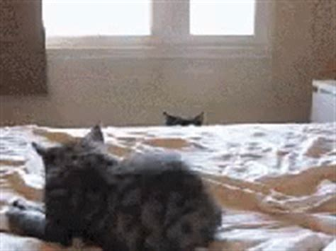 bed gif cat stalking gif cat stalking kitten gifs say more