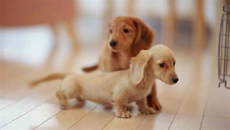 dogs images puppys wallpaper and background photos 28013072