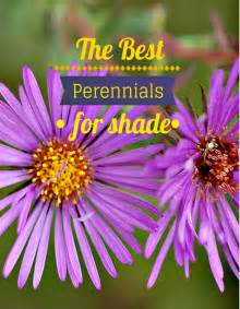 flowers for the shade garden the best perennials for shade perennials gardens and plants
