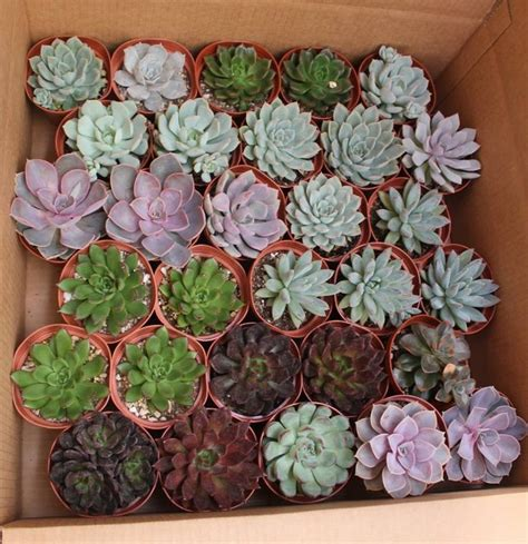 succulent containers for sale 17 best images about succulents for sale on pinterest