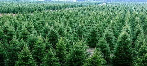 sloan nursery christmas trees