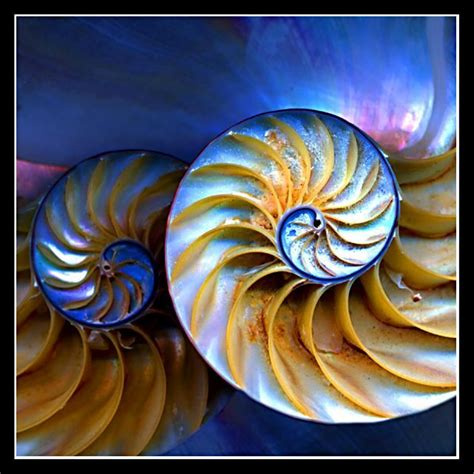 nautilus pattern nature 55 best images about nature nautilus on pinterest sea