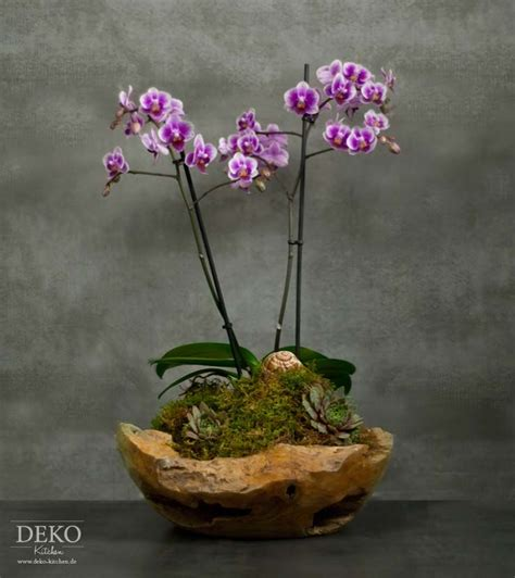Orchideen Deko Ideen by Diy Orchideen Effektvoll Dekorieren Deko Kitchen Plants