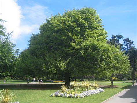 american tree trees favething