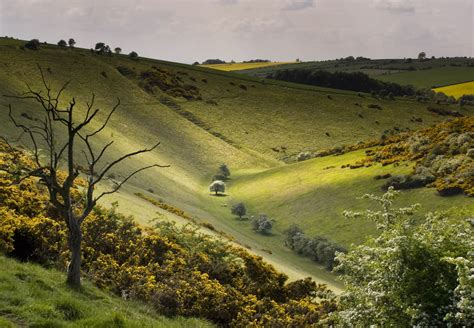 Landscape Photography Wolds David Hockney And The Wolds On Landscape