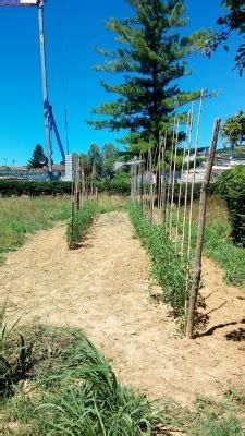 l orto di casa e nato l orto di casa pina coop
