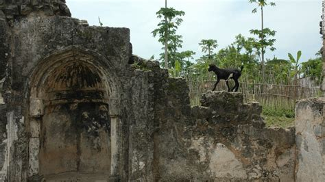 which hairstyle dates backto ancient africa and remains popular to the day the standing ruins of kilwa