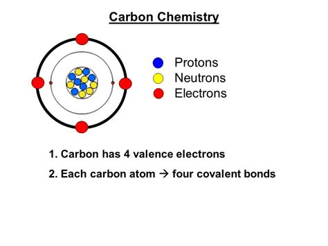 Carbon Protons Neutrons And Electrons by Chemical Basis Of Ppt