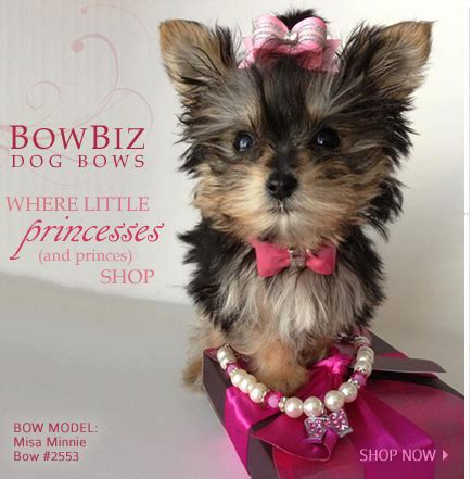 yorkie puppies with bows bows quality bows yorkie maltese shih tzu by bowbiz animal