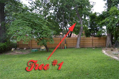 naked in my backyard crooked tree crooked tree lansdowne life
