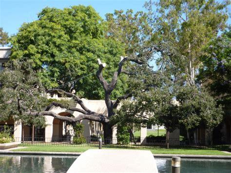 Olive Garden Pasadena by Caltech Olive Walk Pasadena Travels With Mai Tom