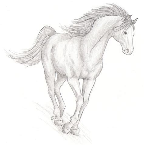Sketches Horses by Realistic Sketch By Wildspiritwolf On Deviantart