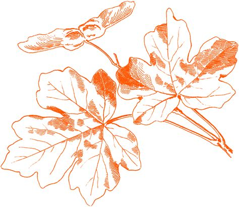 Home And Garden Decor free vintage autumn images maple leaves the graphics fairy