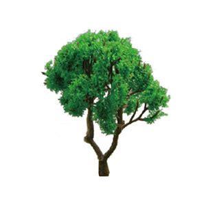 Scale Model Trees