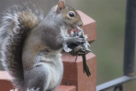 image gallery squirrel bird