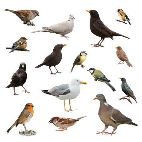 how well do you score on this british birds quiz yours