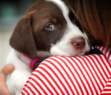 my dog can t get comfortable puppy training how to get your dog comfortable with being