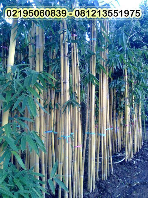 Lu Hias Bambu tukang taman tukang rumput tukang kolam green