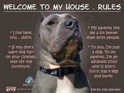 welcome to my house dog rules welcome to my house dog rules fur baby pinterest