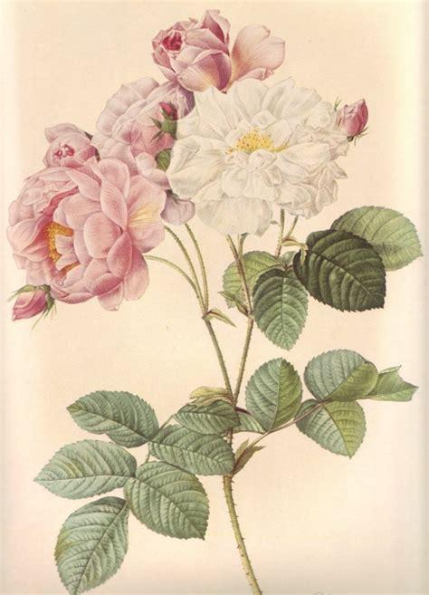 printable vintage flowers vintage flower print large rose botanical print